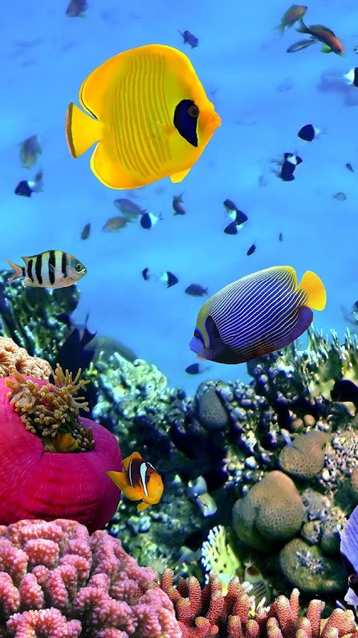 Ocean Fish Live Wallpaper Android Apps on Google Play