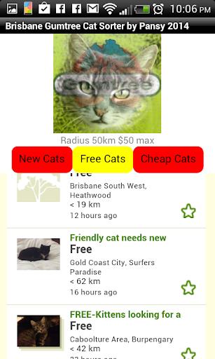 Brisbane Gumtree cat sorter