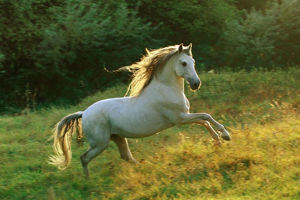 Galloping Horse Silhouette Horse Gallop Screenshot