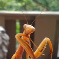 Bugs of Michigan, Wisconsin, Illinois, Indiana, Ohio, and Toronto