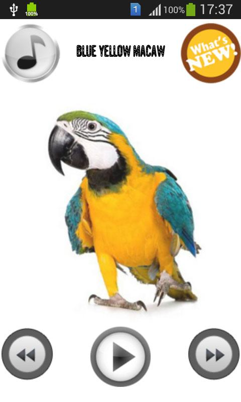 Parrot Sounds & Ringtones - screenshot