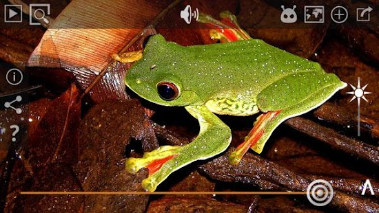 Frog Find- screenshot thumbnail