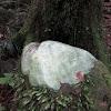 Rainforest Lichen (crust species?)