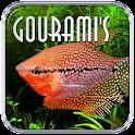 Gouramis icon