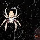 Spider plus Web