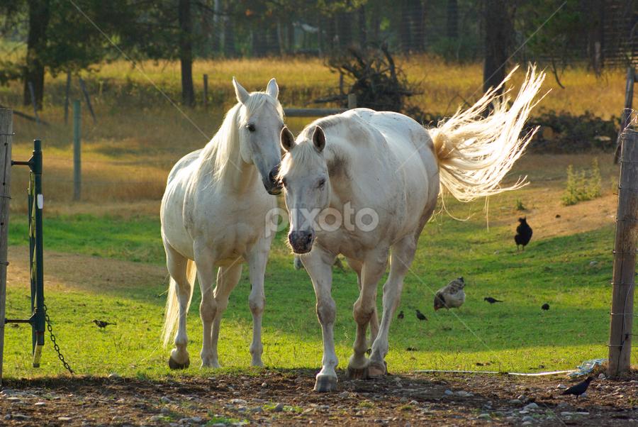 by Giselle Pierce - Animals Horses
