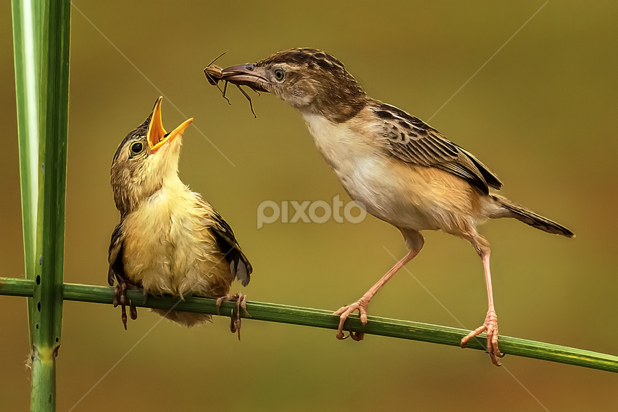 Lunch Time by Husada Loy - Animals Birds