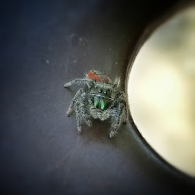 I see you. by Nena Guzmán - Animals Insects & Spiders ( macro, life, park, nature, spider,  )