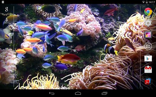 熱帶水族館动态桌布(PRO FREE)