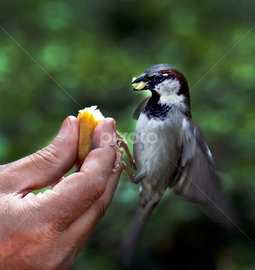 by Kristinn Gudlaugsson - Animals Birds