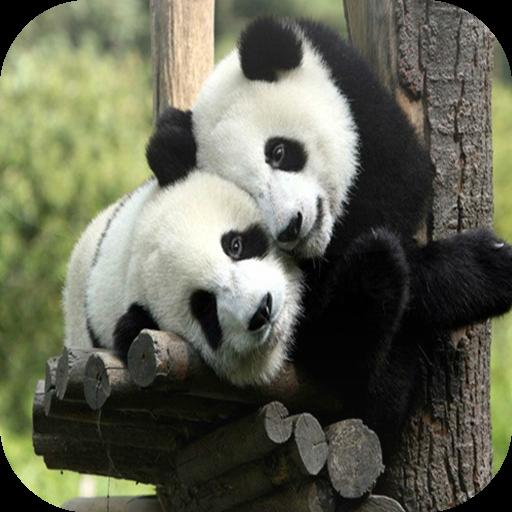 簡單的動物拼圖 解謎 App LOGO-APP開箱王