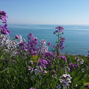 Good morning from Lake Michigan... by Amy Barcroft - Flowers Flowers in the Wild