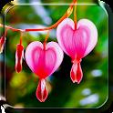 Flores e Forações Papel Parede icon