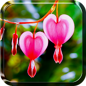 Heart Flower Live Wallpaper