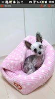 Screenshot of 犬写真集③レオ君との出会い(!)チャイクレでんすけ君