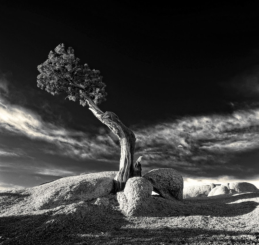 Grown In Rock 2 by Thomas Born - Black & White Flowers & Plants (  )
