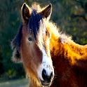 Pony! logo