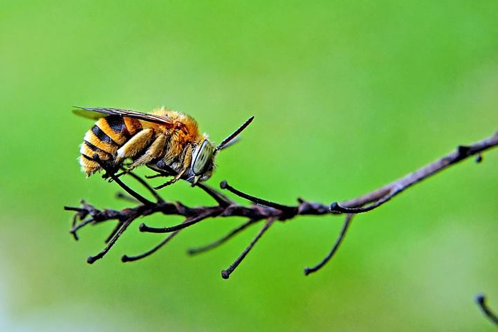 by ERFAN AFIAT SENTOSA - Animals Insects & Spiders