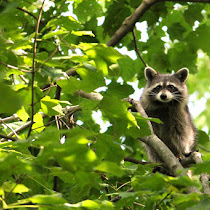Wildlife at Hueston Woods