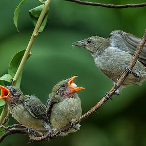 Mama...we need more food by Husada Loy - Animals Birds