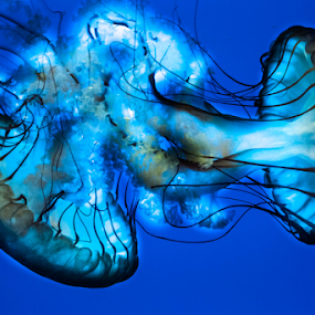 by Viks Pix - Animals Sea Creatures ( over, jellyfish, edited, cool, effect, fish, electric, exposed, jelly, creature, sea )