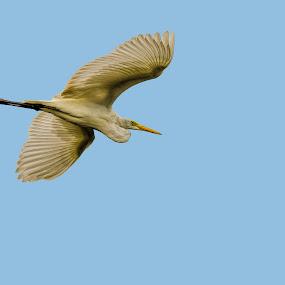 by Biswajit Chatterjee - Animals Birds