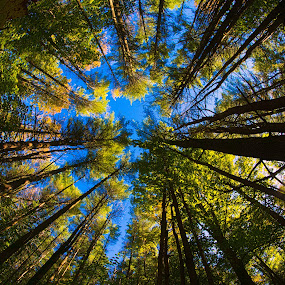 by Walt Mlynko - Uncategorized All Uncategorized ( home, fisheye, sky, art and academia, man made, trees )