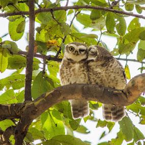 Love Birds by Gaurav Madhopuri - Novices Only Wildlife