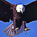 Bald Eagles American Pride logo