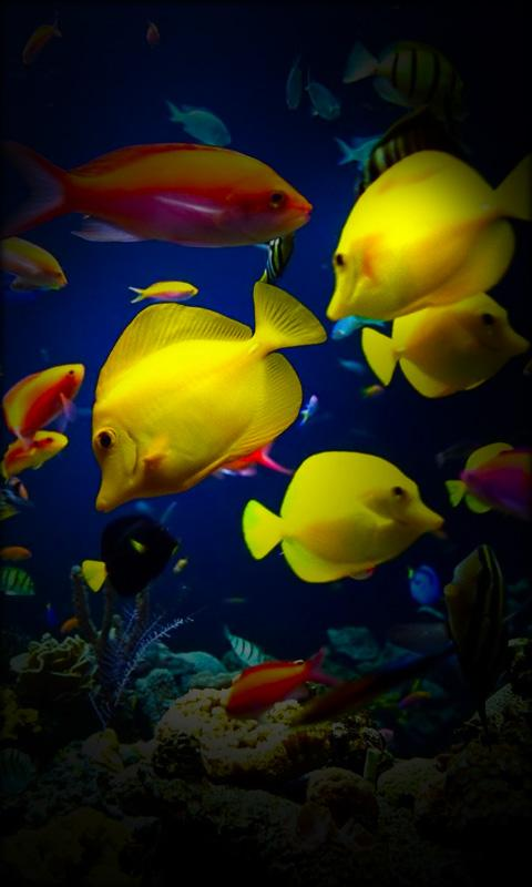 Aquarium Live Wallpaper- screenshot