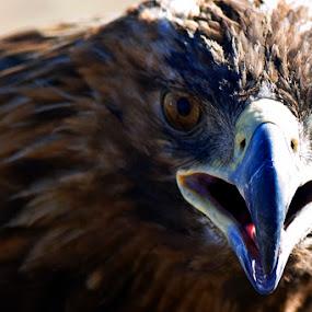 hello  by Dolors Bas Vall - Animals Birds ( animals, glances, birds )