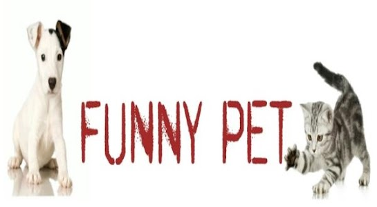 Funny Pet Shop screenshot 2