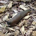 Black garden slug