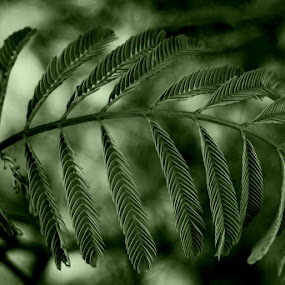 by Jeffery Glenn Scism - Nature Up Close Leaves & Grasses