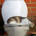 Hangover Cat Live Wallpaper icon