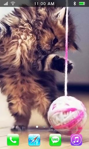 Pussy Kitties live wallpaper