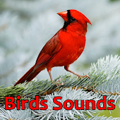 Birds Sounds