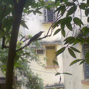 this is a pic from kolkata,my hometown by Jayita Mallik - Nature Up Close Leaves & Grasses (  )