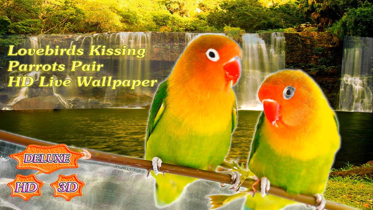 Lovebirds Kissing Parrots Pair- screenshot