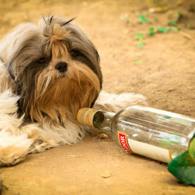 'Hammered' by Ryan Hortizuela - Novices Only Pets