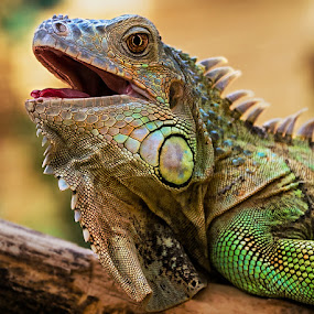 by Renos Hadjikyriacou - Animals Reptiles ( , colorful, mood factory, vibrant, happiness, January, moods, emotions, inspiration )