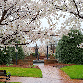 Rainy Day by Roy Walter - City,  Street & Park  City Parks ( park, trees, flowers, city park, spring )