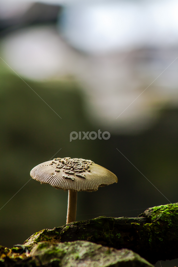 Mushroom by Dave Martin - Nature Up Close Mushrooms & Fungi ( mushroom, single mushroom,  )
