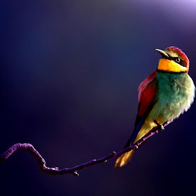 Waiting For My Friend by Sudipta Dey - Animals Birds