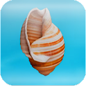 Cheeky Conch Shell (Oracle)