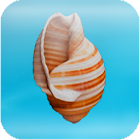 Cheeky Conch Shell (Oracle) icon