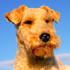 Dog Breeds, HD Catalog icon