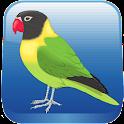 Birds Quiz