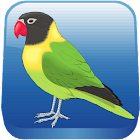 Birds Quiz icon