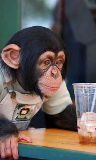 Talking Funny Monkey Free LWP